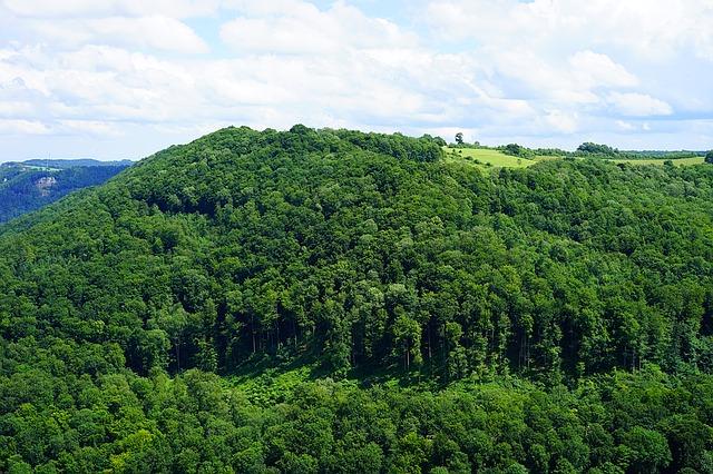 カルパチア山地と他ヨーロッパのブナ原生林の画像1