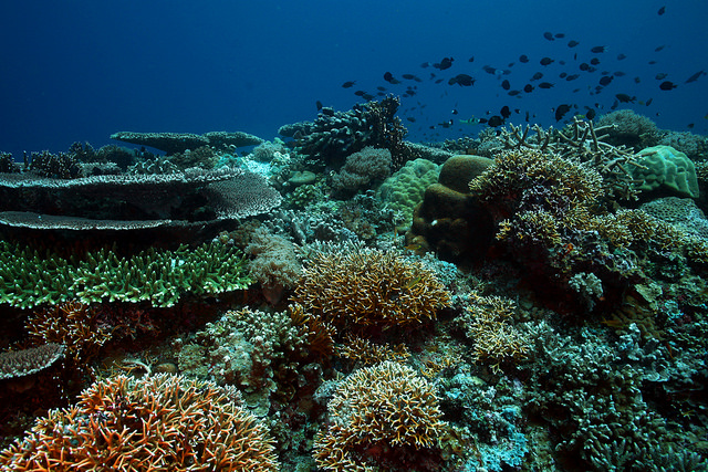 トゥバタハ岩礁自然公園