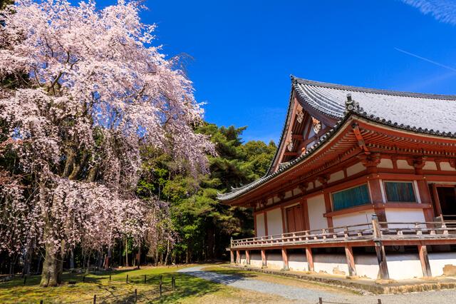 醍醐寺の画像1