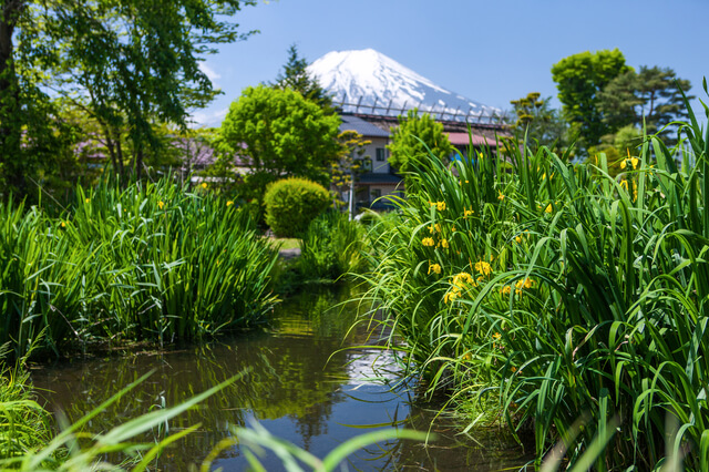 忍野八海:菖蒲池の画像1