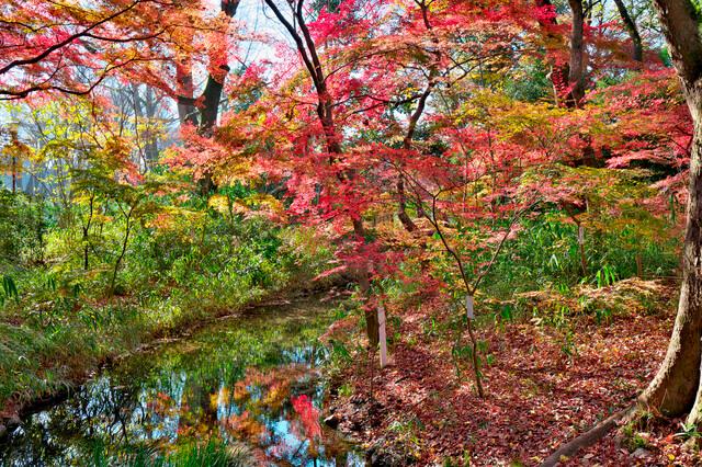 古都京都の文化財の画像15