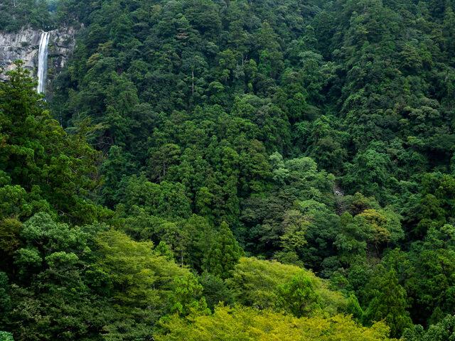 紀伊山地の霊場と参詣道の画像22