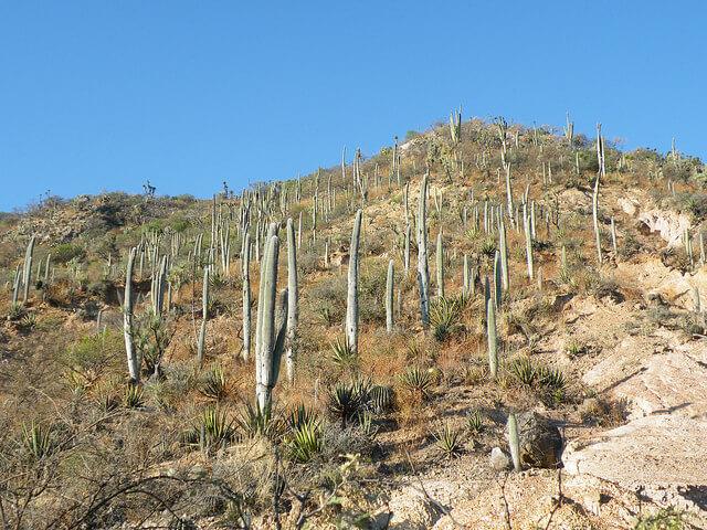 テワカン=クイカトラン渓谷 : メソアメリカの起源となる環境の画像2