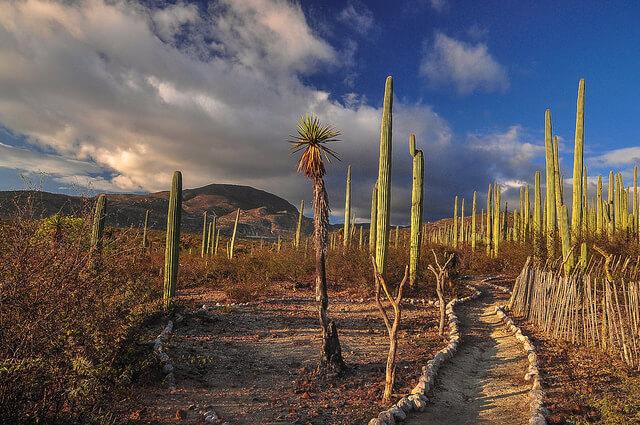 テワカン=クイカトラン渓谷 : メソアメリカの起源となる環境の画像3