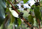 http://world-heritage.s3-website-ap-northeast-1.amazonaws.com/img/1502167766_cuba-coffe.jpg