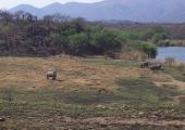 http://world-heritage.s3-website-ap-northeast-1.amazonaws.com/img/1531248034_Rhinoceros_in_the_Songimvelo_Game_Reserve.jpg